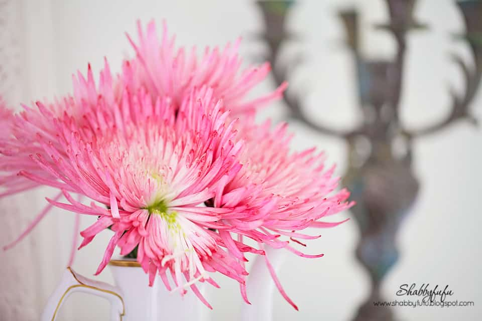 pink flowers in a coffee pot