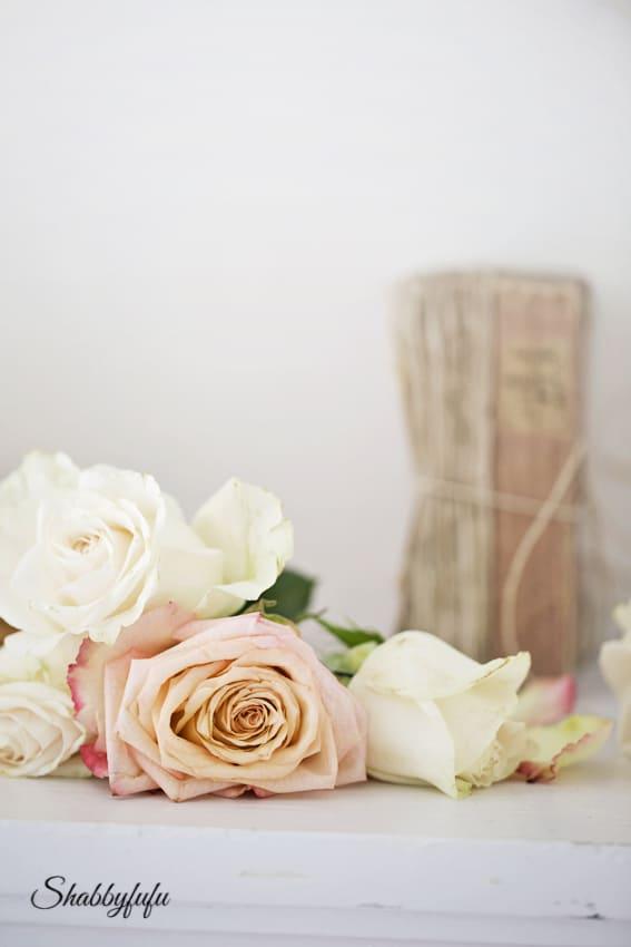 rose photographer