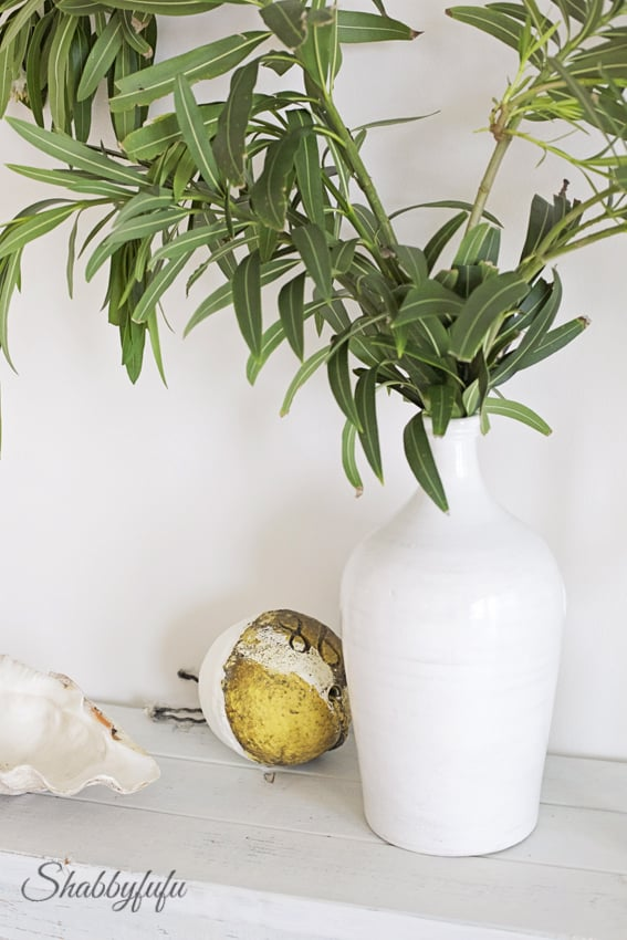 plants as home decor
