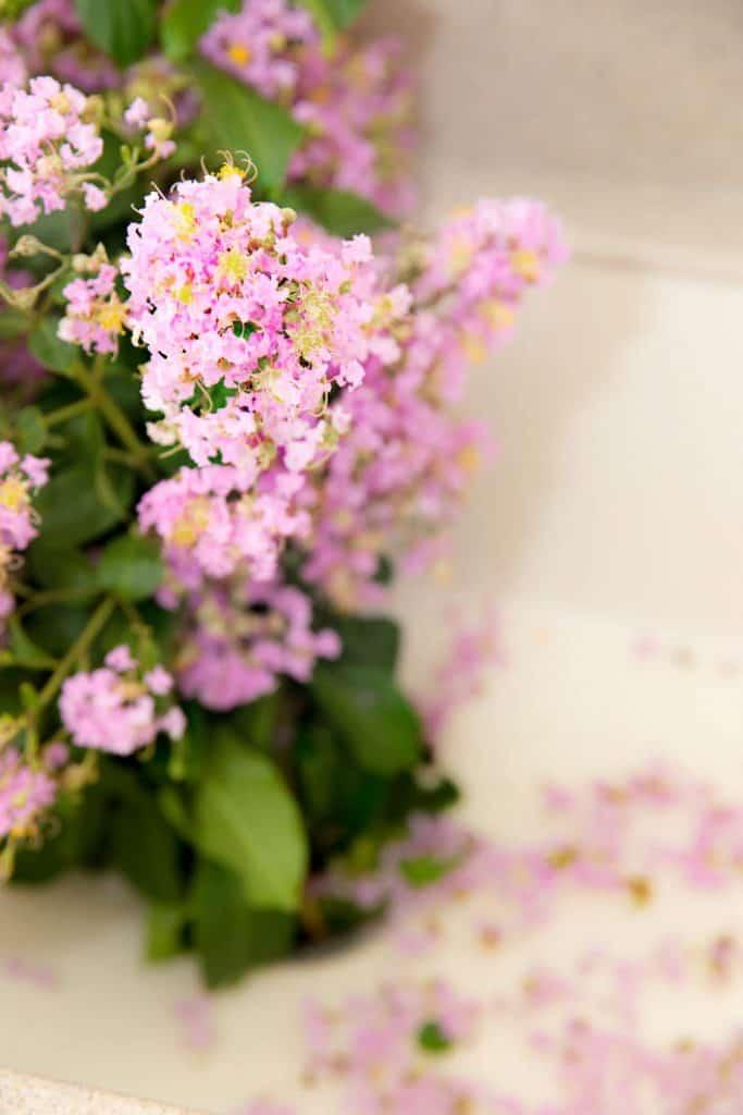 crepe myrtle in floral arrangement
