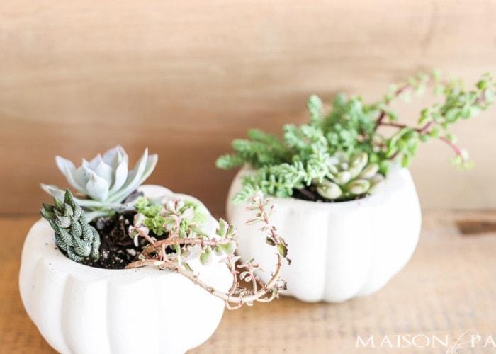 mini succulent planter arrangements