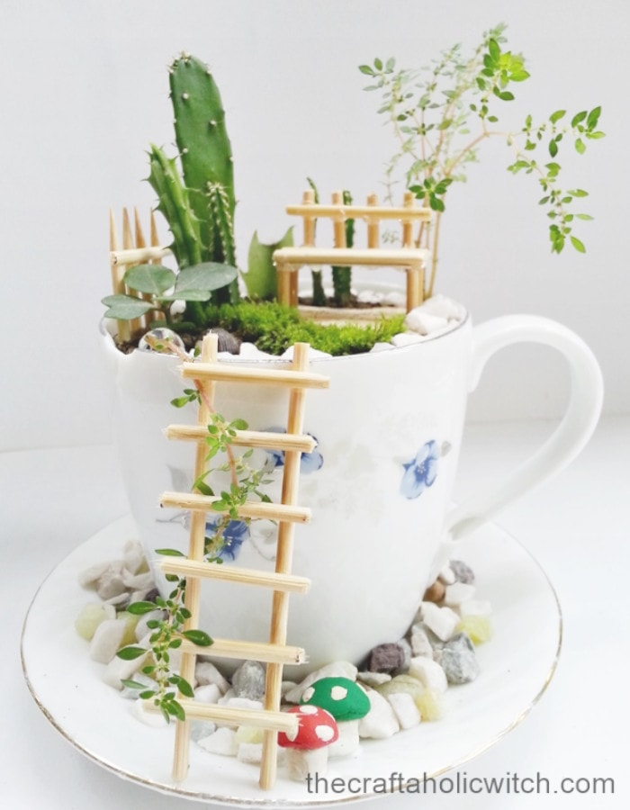 fairy garden succulent planter arrangements