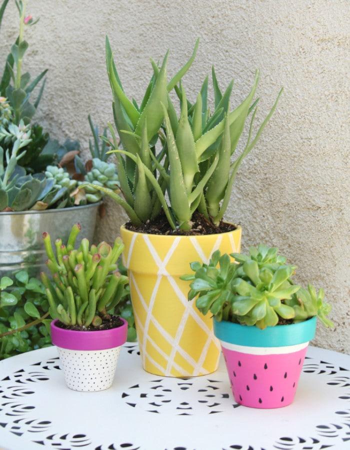 succulent planter arrangements in colorful pots