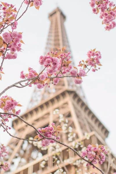 Paris In Bloom – A Book by Floral Photographer Georgianna Lane