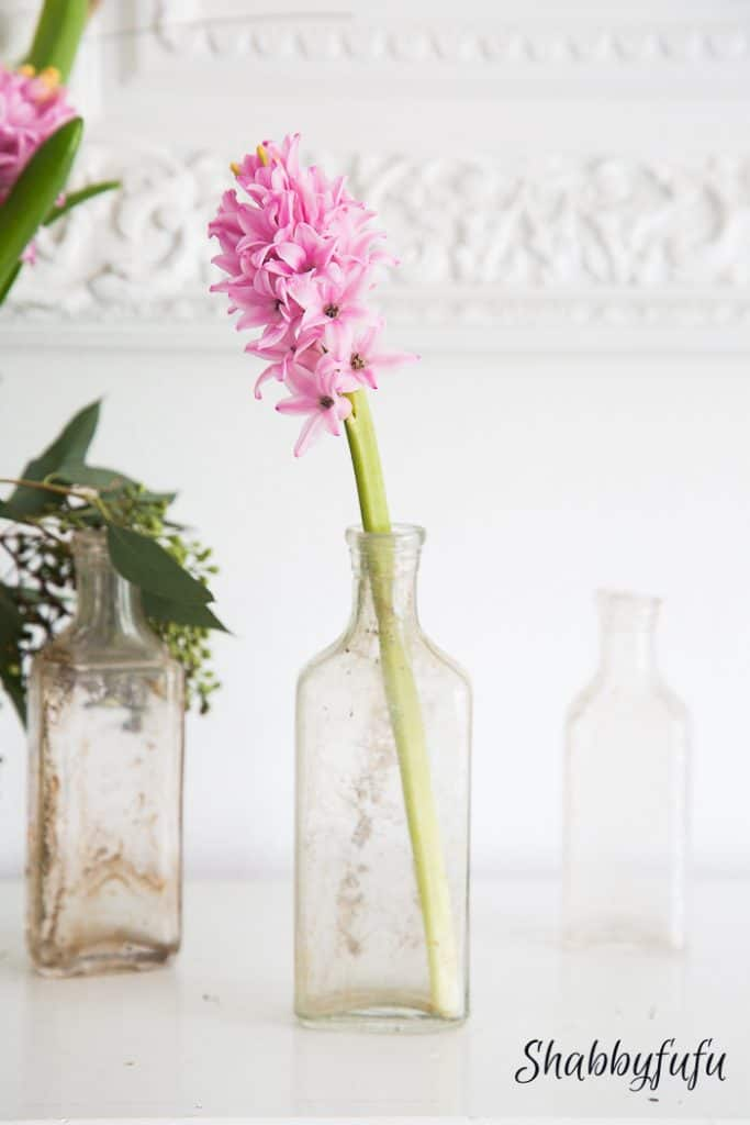 pink hyacinth in a vintage bottle