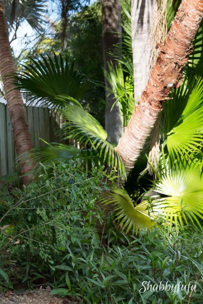 beautiful-tropical-garden-miami