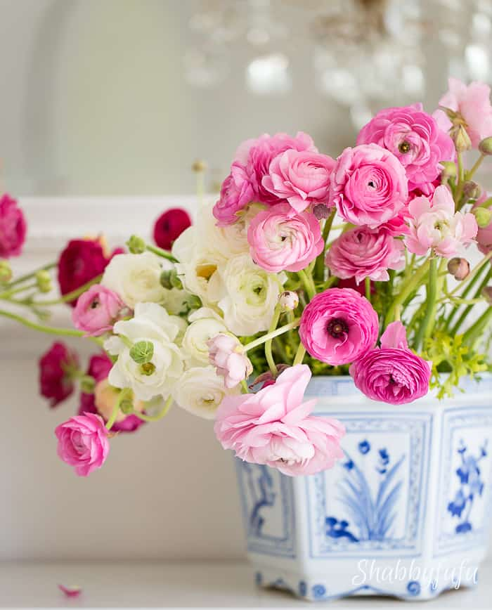 pink-ranunculus-chinoiserie-pot