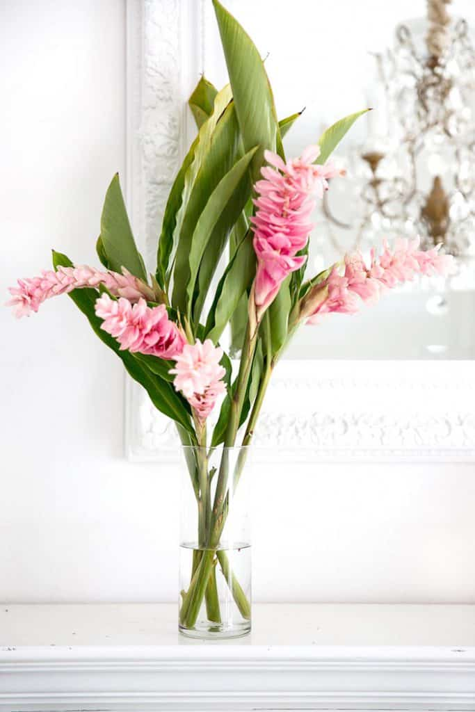 pink ginger flowers in a pot