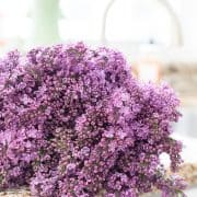 Obsessed – How To Use Lilacs In Your Home Decor
