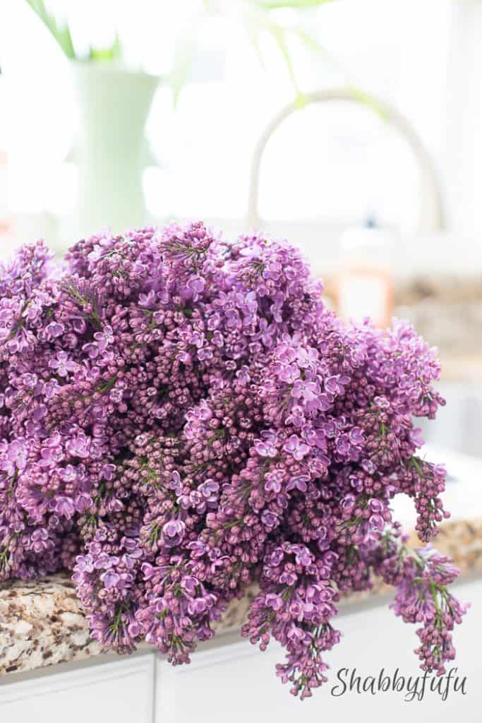 lilacs in the sink shabbyfufublog