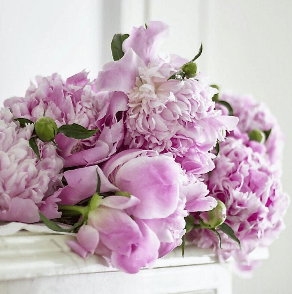 purple garden flowers