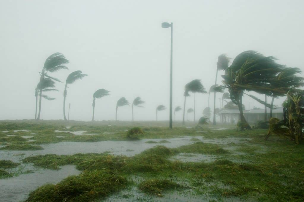 hurricane-palm-trees
