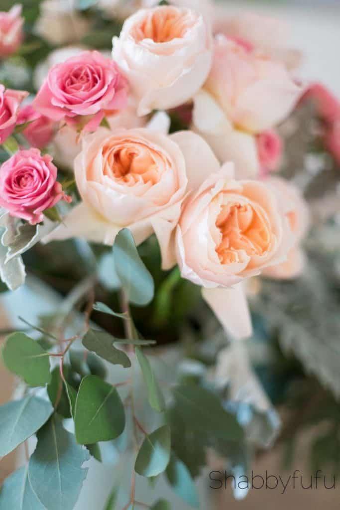 david austin juliet roses