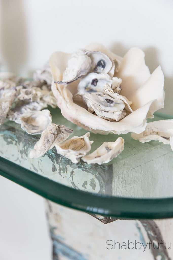 oyster shell display