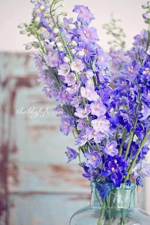 blue-delphinium-shabbyfufu