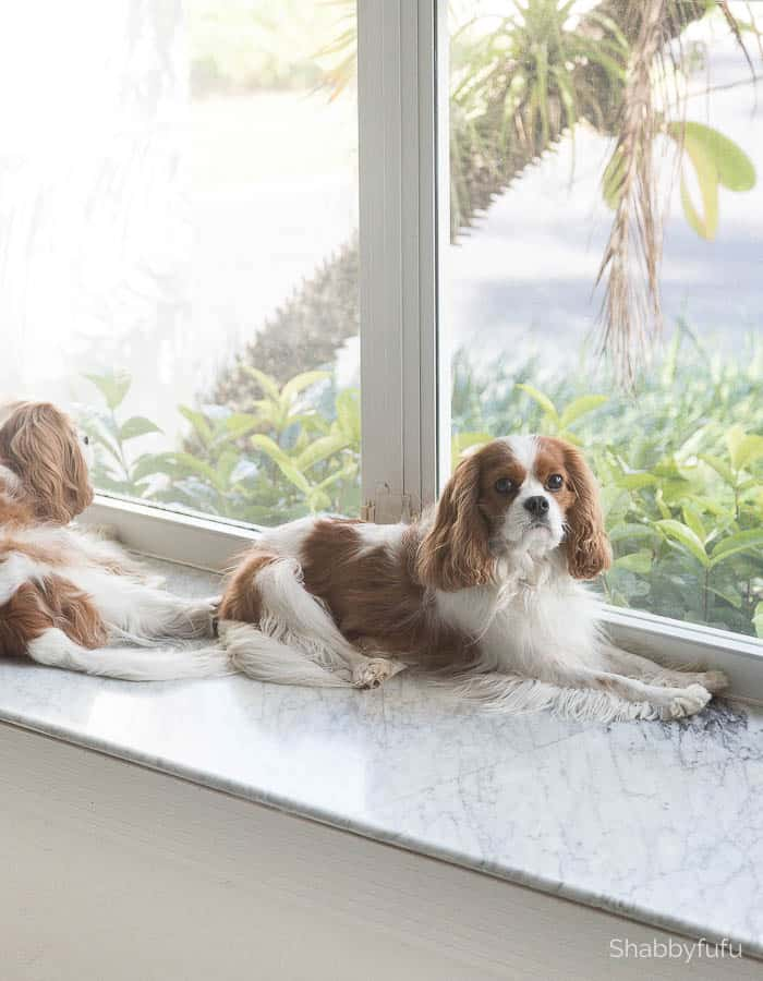 cavalier-king-charles-spaniels-shabbyfufu simple elegant winter decorating