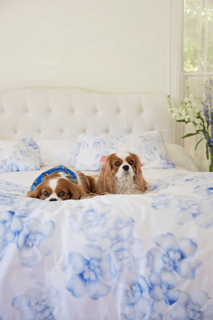 how to use natural tips to remove odors from dogs in bed and furniture