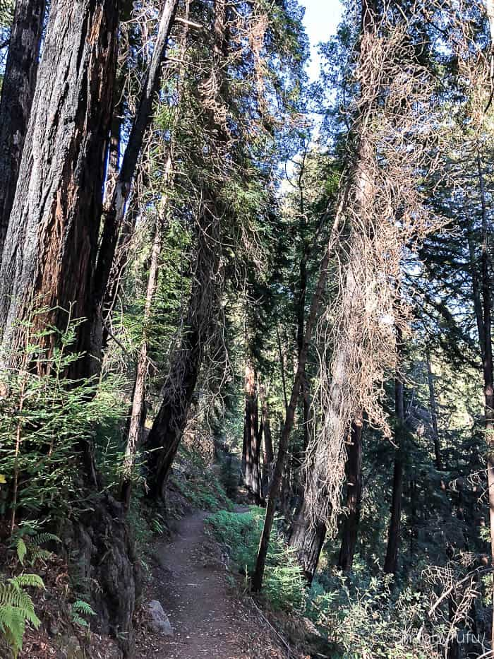 hiking-travel-california-big sur