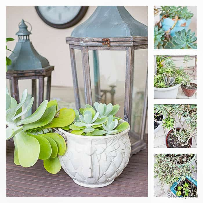 decorative succulents for spring decorating