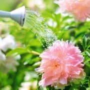 Beginning Gardener – 12 Helpful Tips