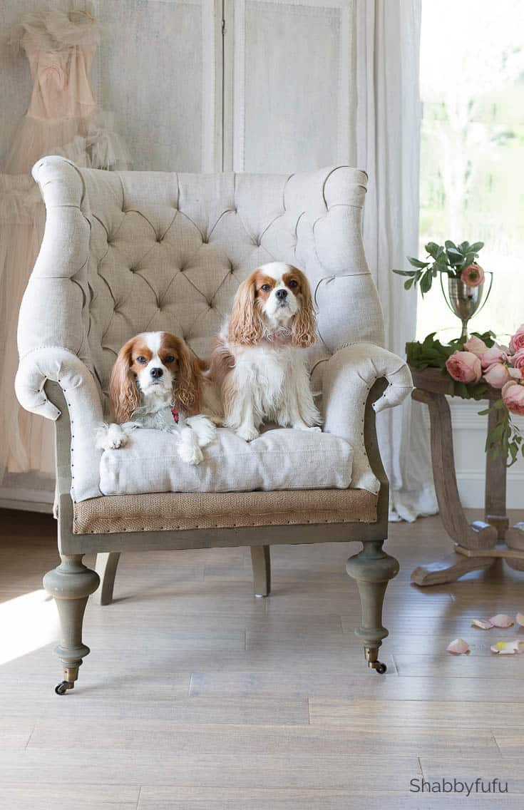 cavalier king charles spaniels on a french chair - how to tackle a bedroom makeover