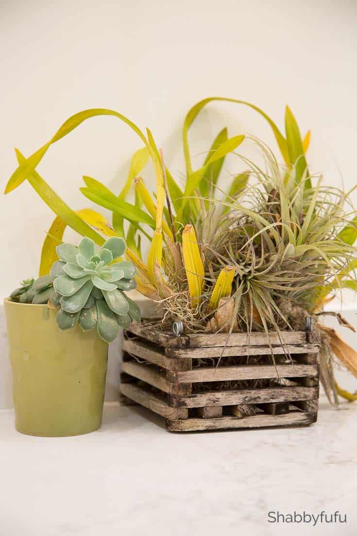 live plants feng shui