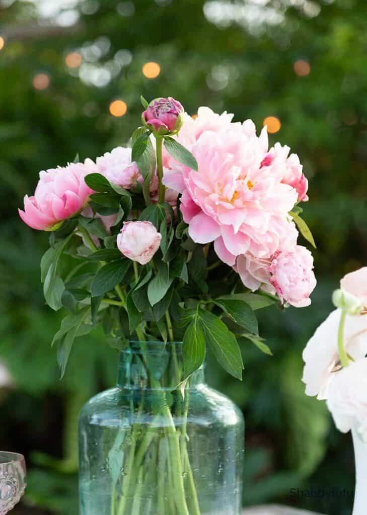 pink peonies outdoor garden setting