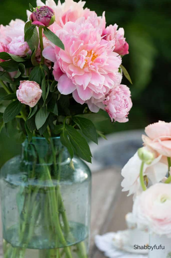 pink peonies garden setting party