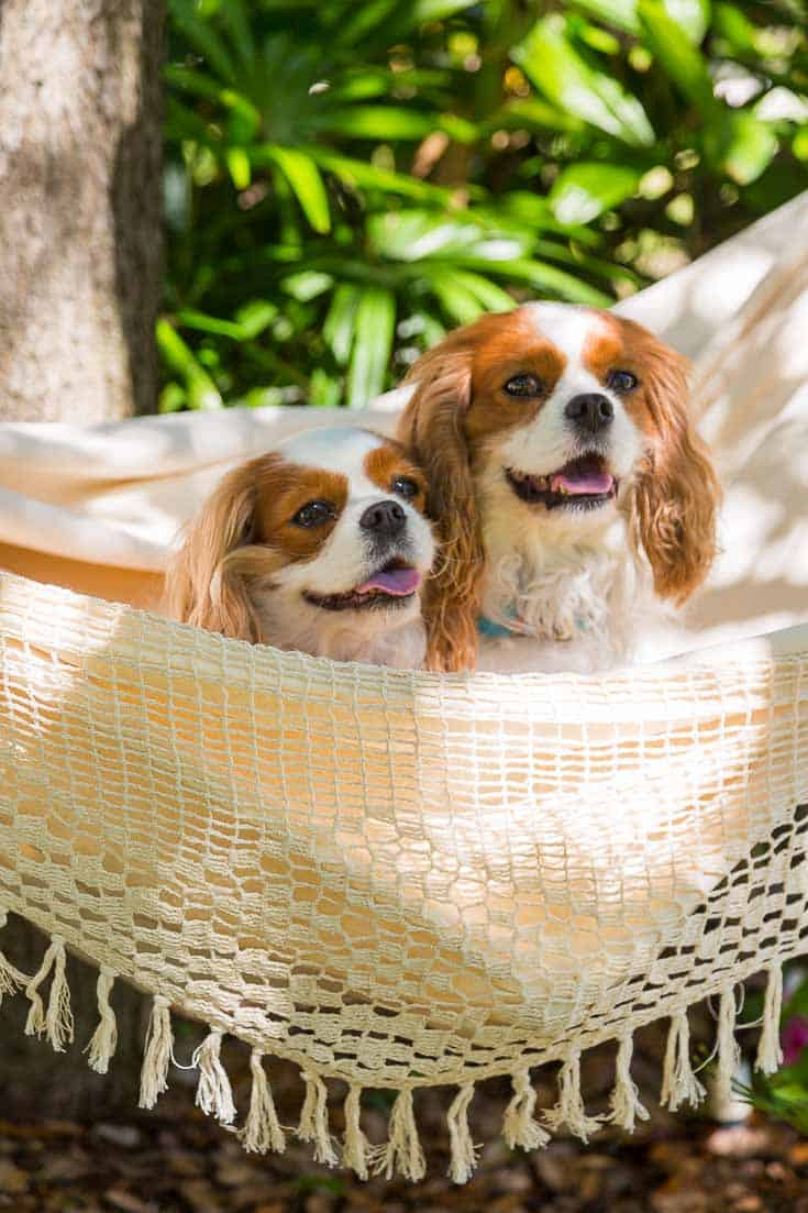 garden hammock summer diy project with dogs