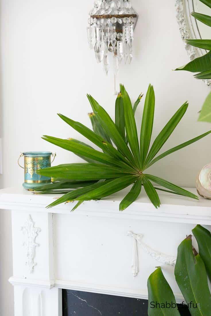 lady palms