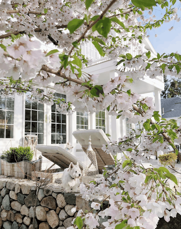 summer house ideas cherry blossoms new england