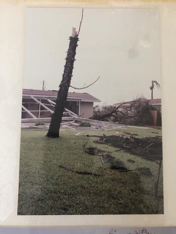 broken trees from hurricane andrew
