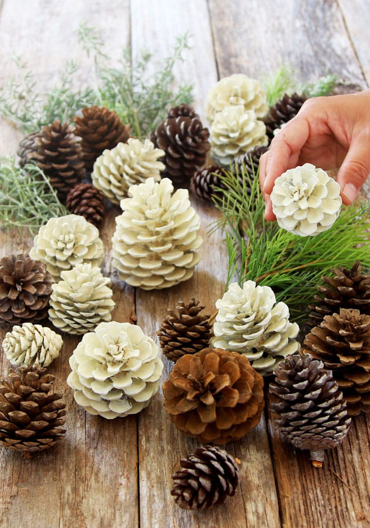 bleached and natural pinecones on a wooden surface