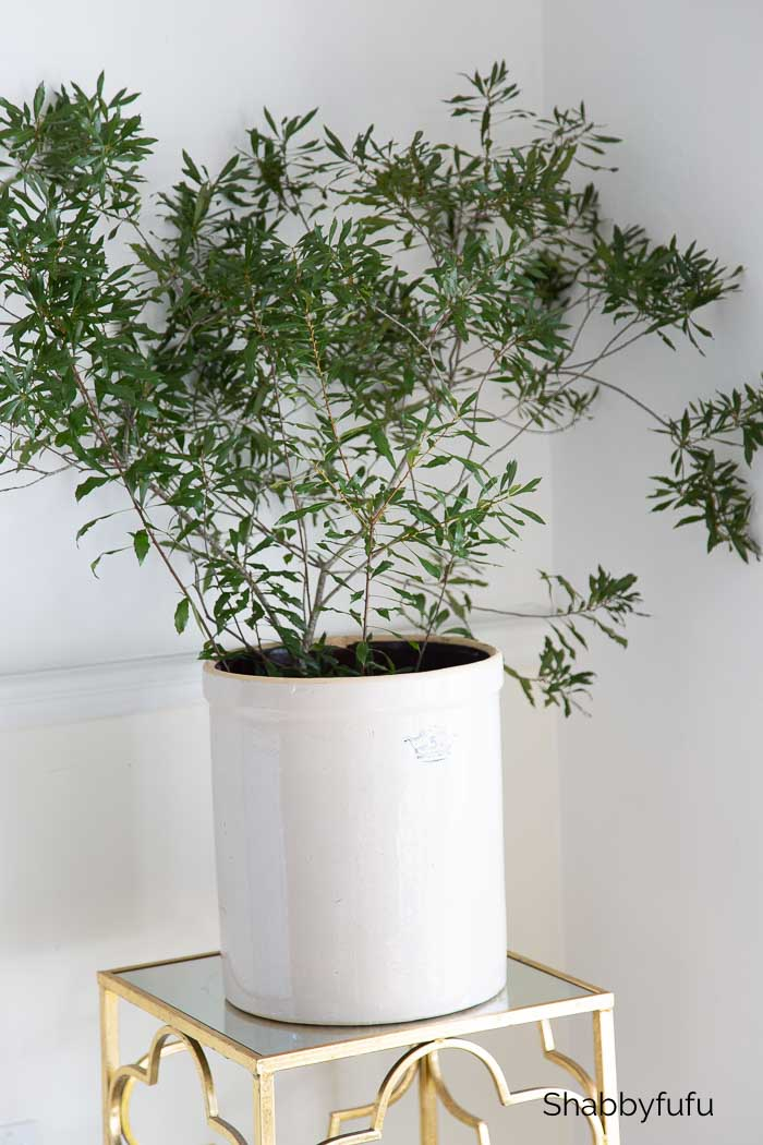 winter decorating ideas after Christmas - wax myrtle