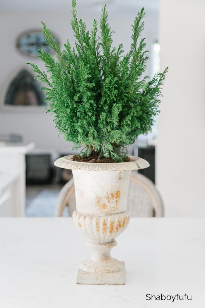 winter decorating ideas after Christmas - cedar tree