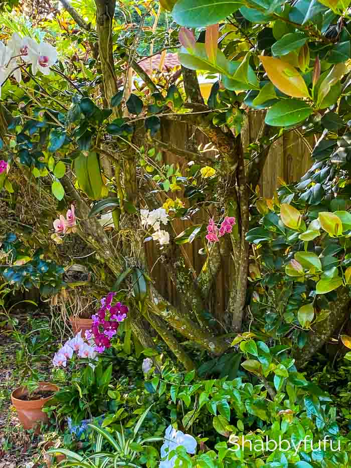 grow orchids on trees
