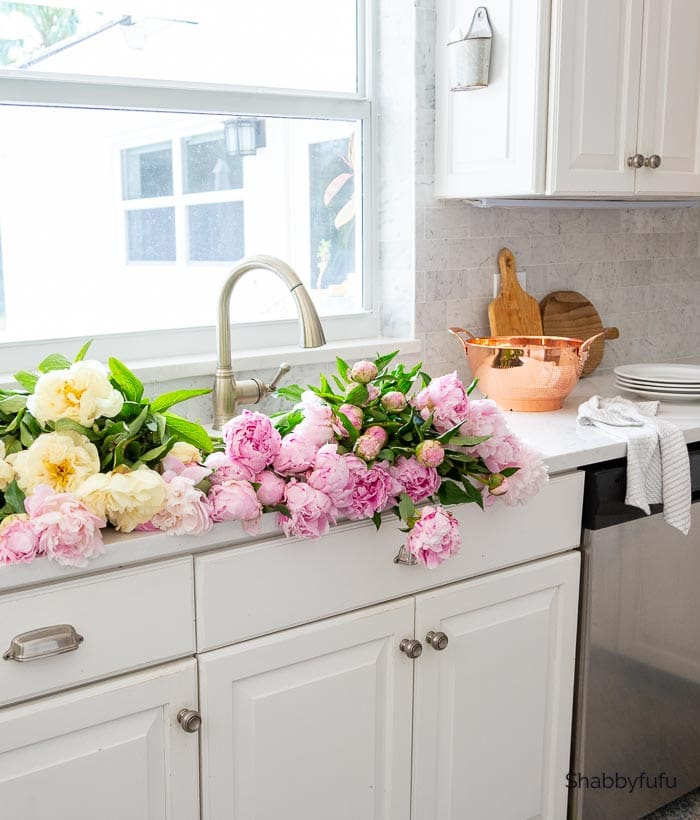 soaking peonies in the sink