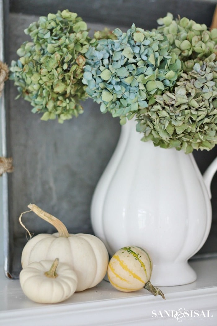 white pitcher filled with blue dried hydrangeas displayed with pumpkins