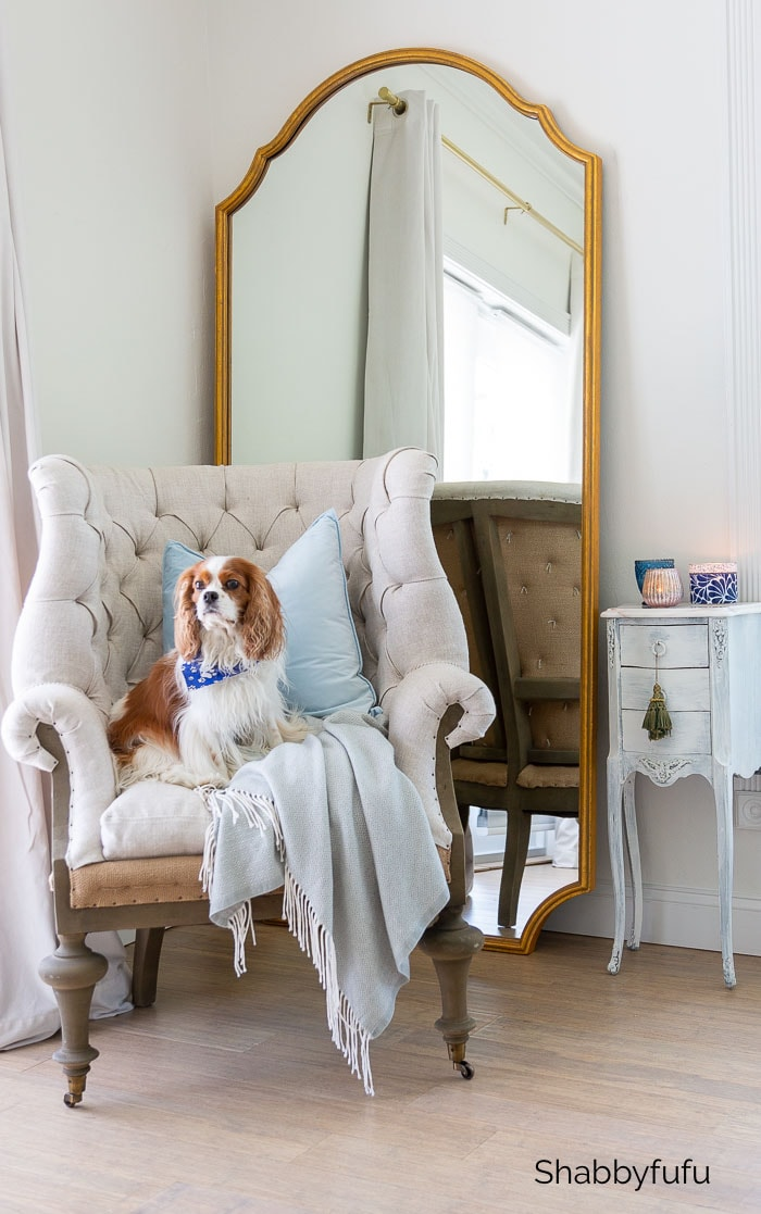 french chair with cavalier king charles spaniel