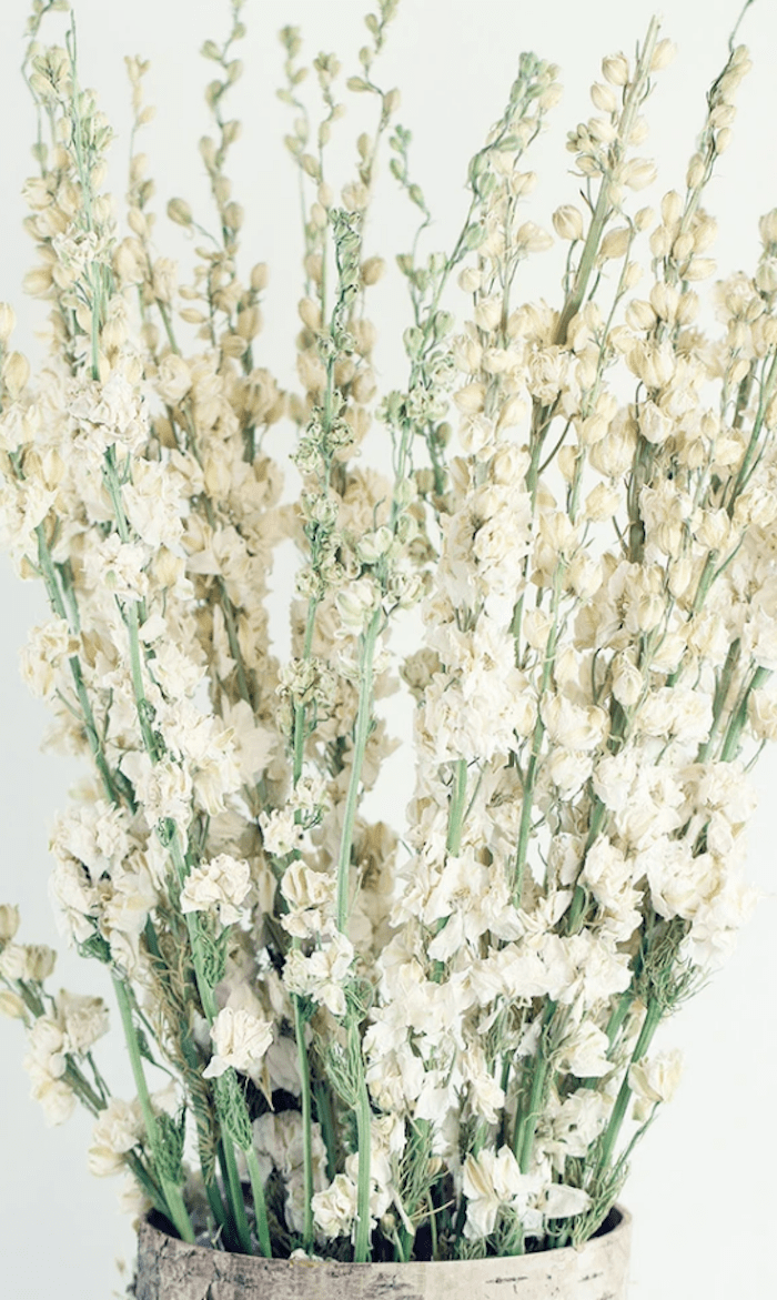 dried French larkspur