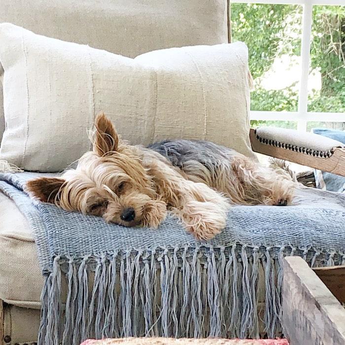 Kim's dog Miss Bailey