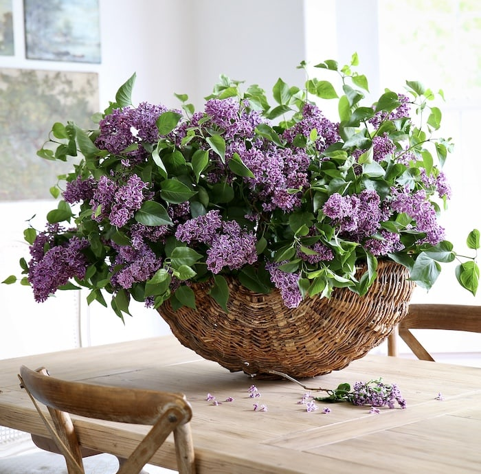French style home lilacs