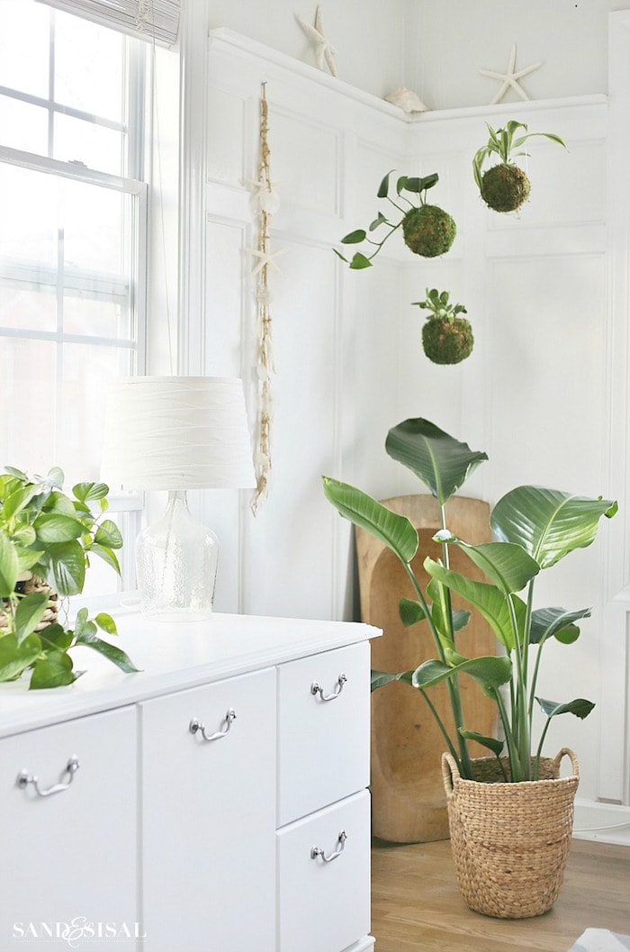 corner of a white room with moss ball planters hanging from the ceiling and a large plant in a basket on the floor