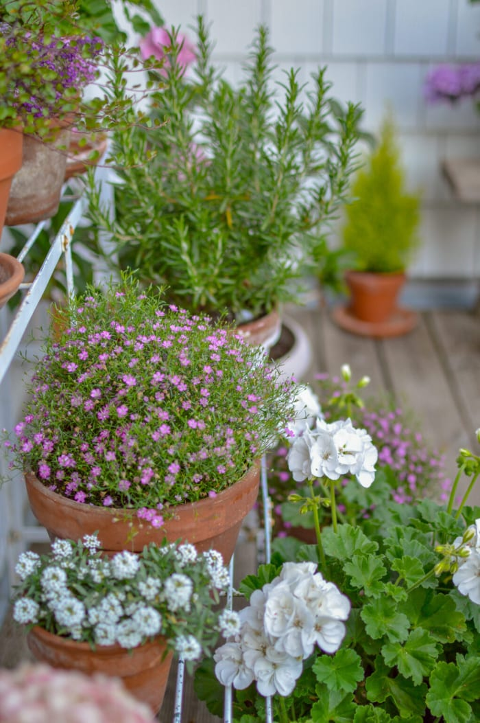 pink, purple and white flowers in terra cotta pots
