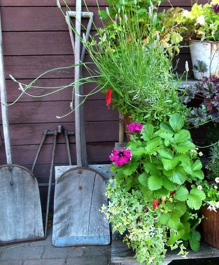 gardening tools beside potted flowers