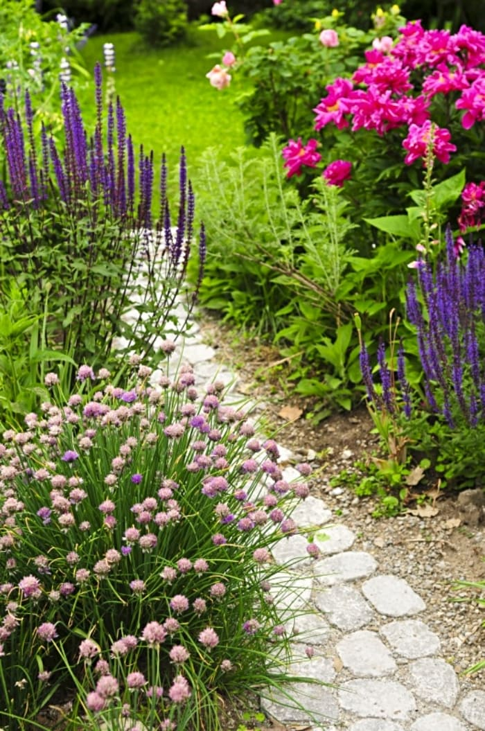 path through garden lined with various flowers and plants