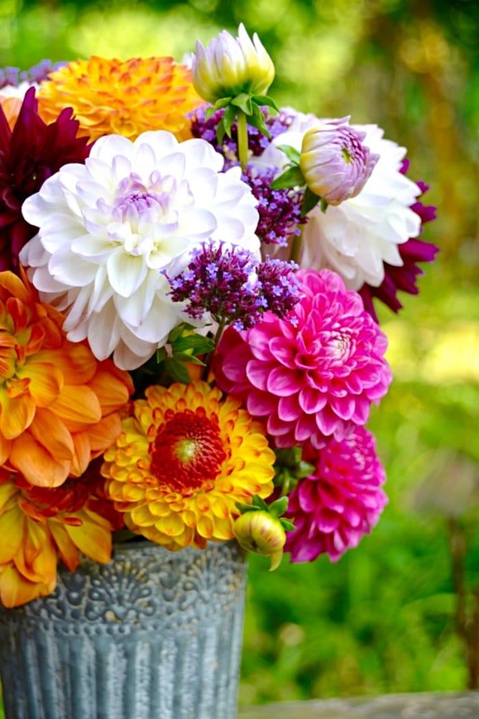 beautiful arrangement of multiple colors of zinnias