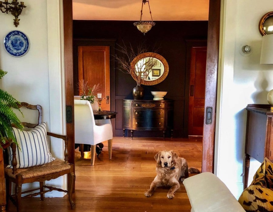elegant dining room with a dark color scheme after decor makeover with golden retriever dog